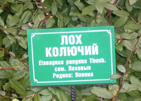 http://anekdotov.net/pic/etiket2/ahun.jpg