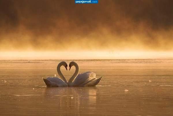 красивые фото фотографии: