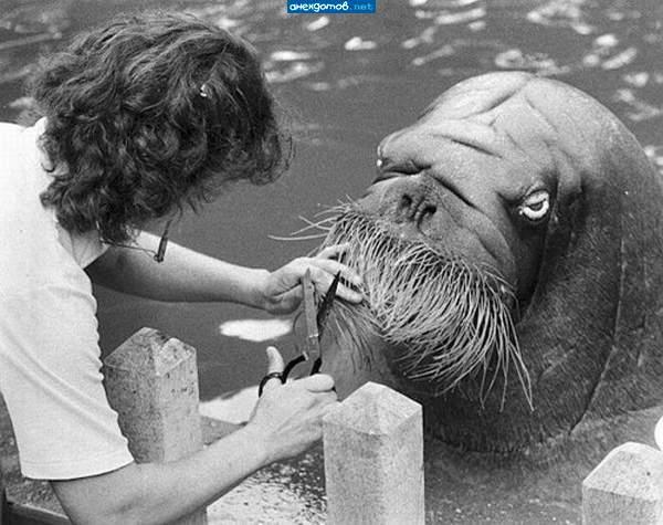 """Ты зачем усы сбрил, дурик?!"" / Звериные фото: http://anekdotov.net/pic/photo/animals/01205289q.html"