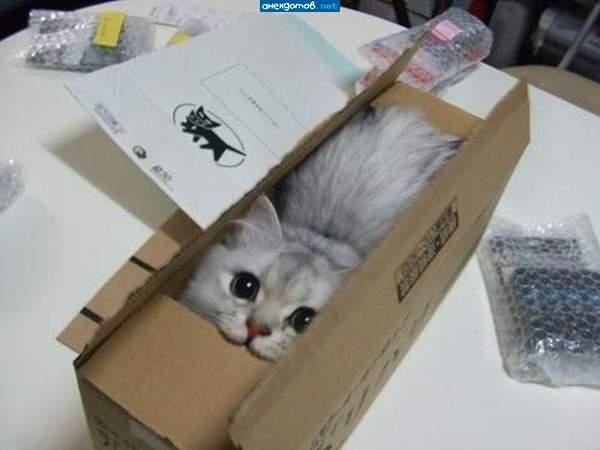 http://anekdotov.net/pic/photo/animals/0875073e.jpg