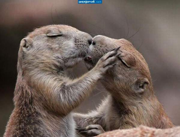 Поцеловать картинки