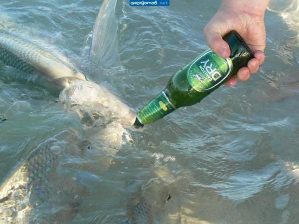 ловля рыбы на водку