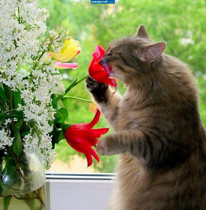 Фото цветов смешные