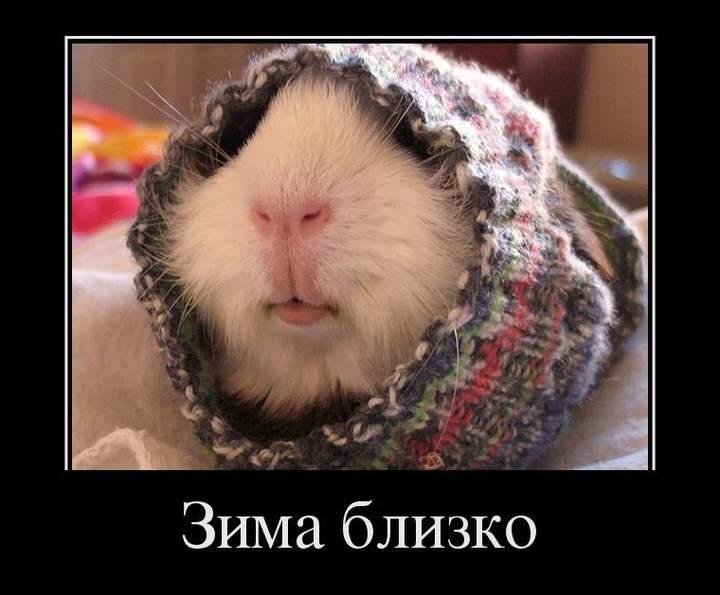 http://anekdotov.net/pic/photo11/11140197j.jpg