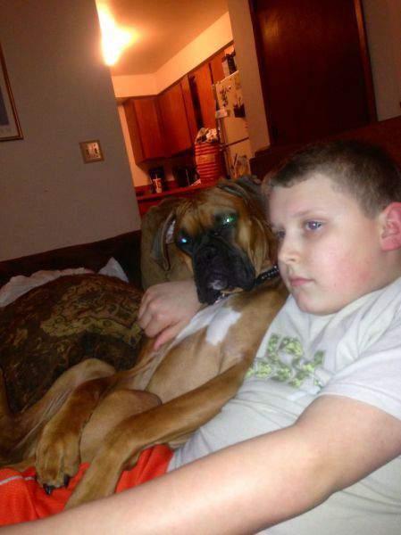 כלב זה ה-אח החדש