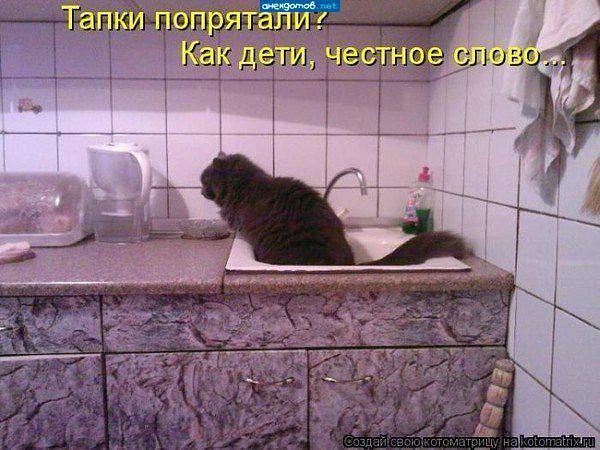 Кот с надписью зачем