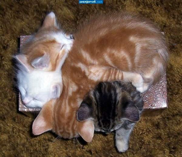 http://anekdotov.net/pic/postcards/cat/0125_2241_99d.jpg