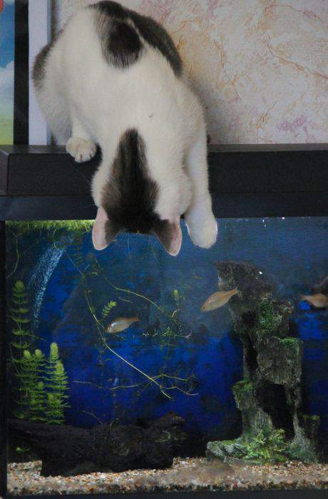 http://anekdotov.net/pic/postcards/cat/01941100b.jpg