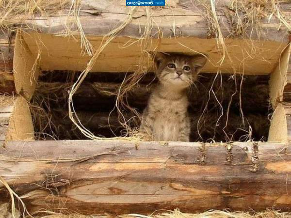 http://anekdotov.net/pic/postcards/cat/0310_827_601d.jpg