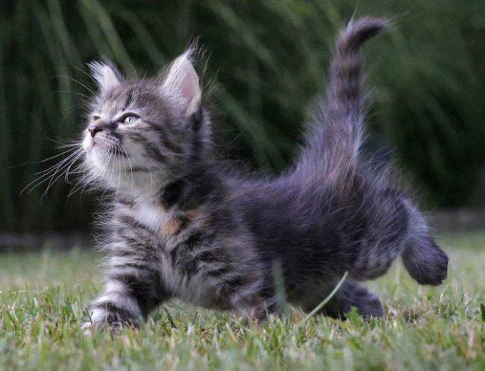 http://anekdotov.net/pic/postcards/cat/03144041d.jpg
