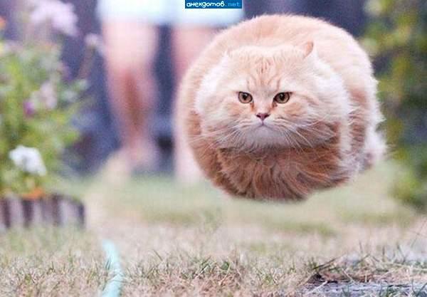 Энгри кот