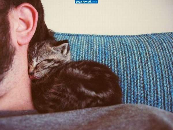 http://anekdotov.net/pic/postcards/cat/03453243z.jpg