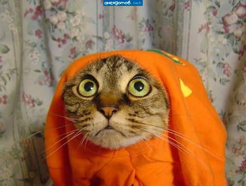 http://anekdotov.net/pic/postcards/cat/0414_241a928ef050ecbb385613d1ee014919.jpg