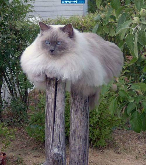http://anekdotov.net/pic/postcards/cat/04155341j.jpg