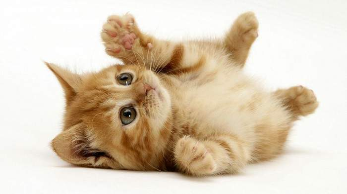 http://anekdotov.net/pic/postcards/cat/05134085r.jpg