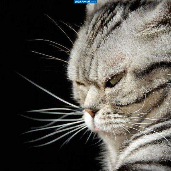 http://anekdotov.net/pic/postcards/cat/052652100h.jpg