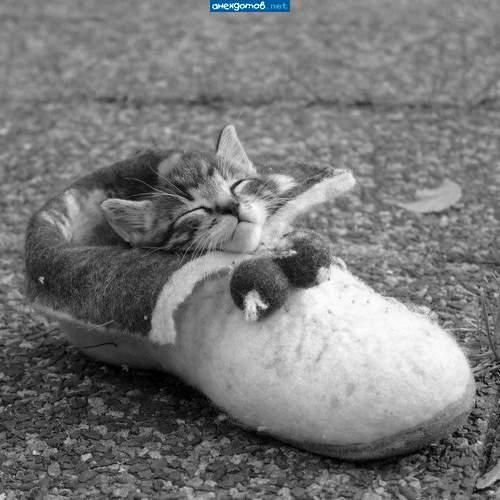 http://anekdotov.net/pic/postcards/cat/0527_753_161.jpg