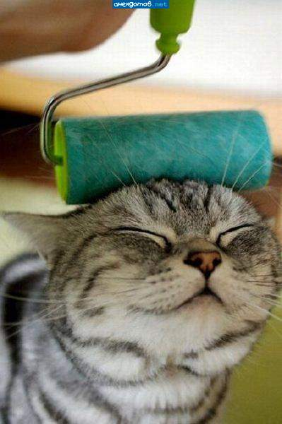 http://anekdotov.net/pic/postcards/cat/0575275y.jpg