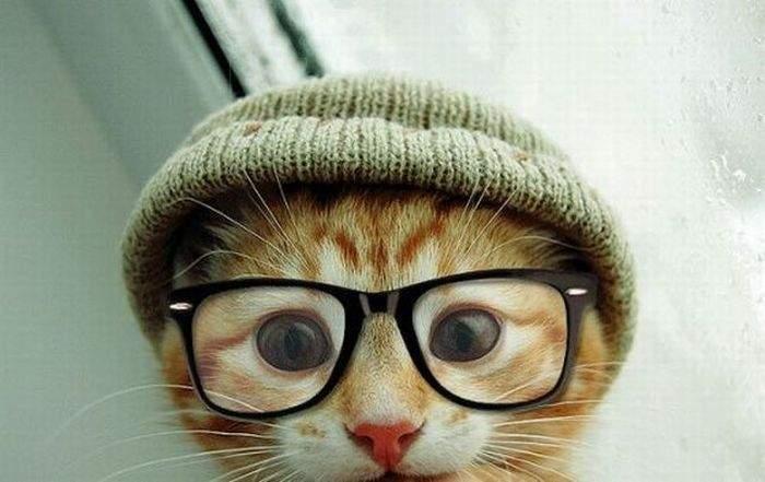 кошки прикольное фото