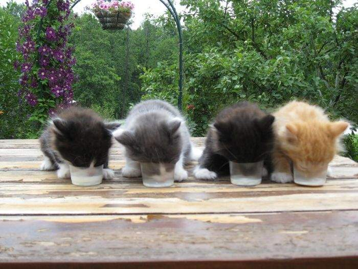 http://anekdotov.net/pic/postcards/cat/07134094r.jpg