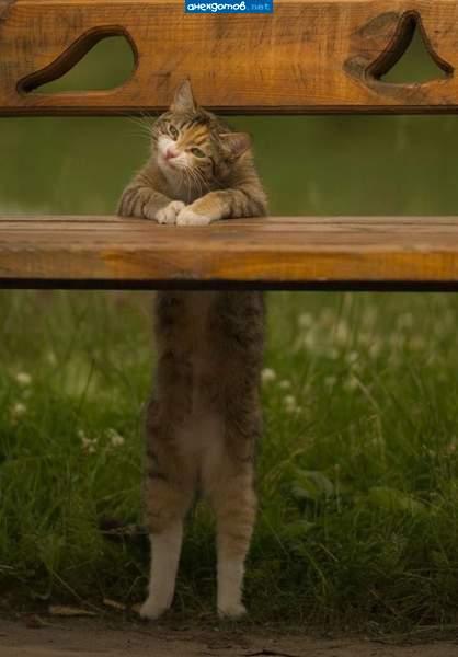 http://anekdotov.net/pic/postcards/cat/0785054k.jpg