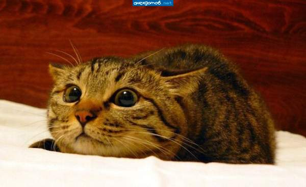 http://anekdotov.net/pic/postcards/cat/0855072z.jpg