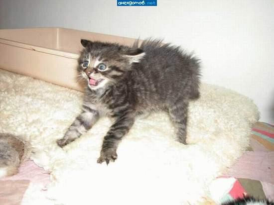 http://anekdotov.net/pic/postcards/cat/088_97_494b.jpg