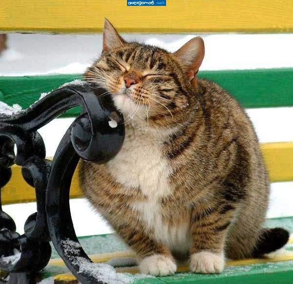 http://anekdotov.net/pic/postcards/cat/09305081g.jpg