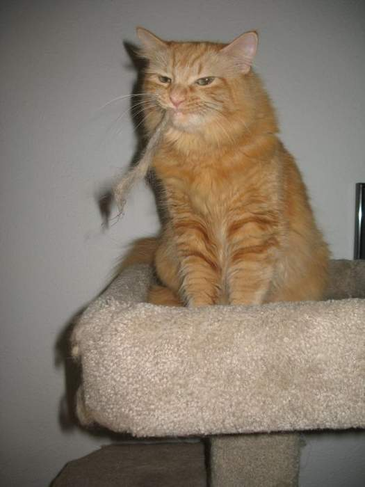 http://anekdotov.net/pic/postcards/cat/0934267k.jpg