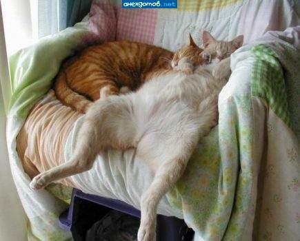 смешные картинки спать хочу
