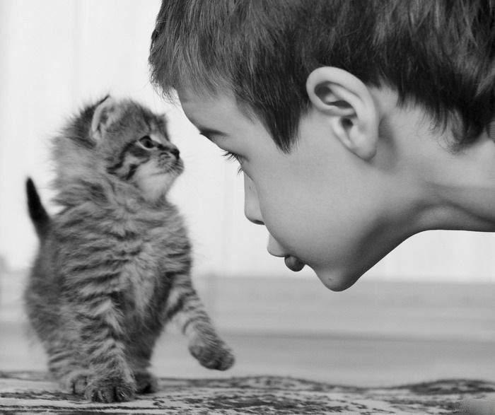 http://anekdotov.net/pic/postcards/cat/1215017w.jpg