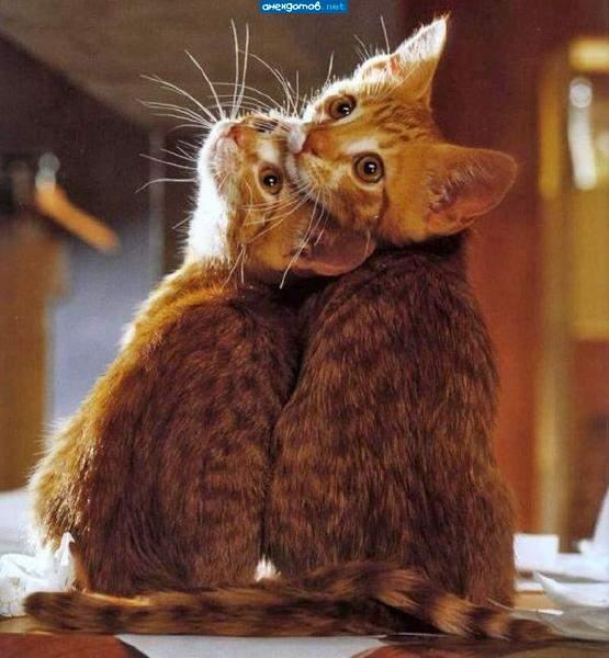 http://anekdotov.net/pic/postcards/cat/121552100h.jpg