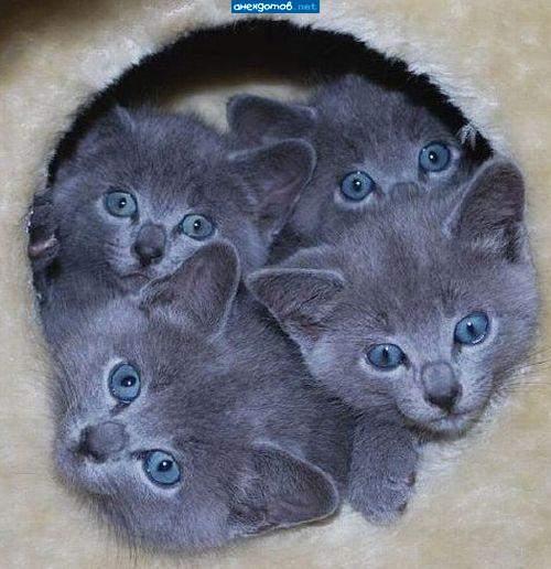 http://anekdotov.net/pic/postcards/cat/12175171v.jpg