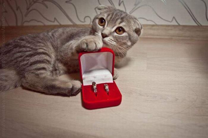 http://anekdotov.net/pic/postcards/cat/12234120u.jpg