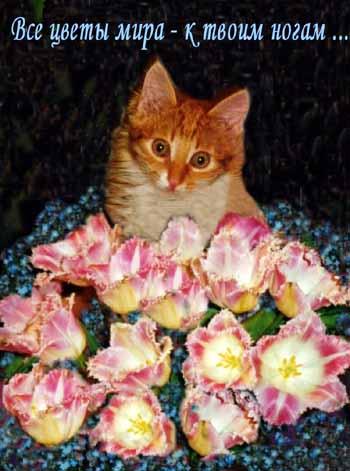 я цветы положу к твоим ногам различных