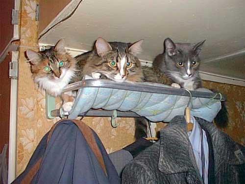 http://anekdotov.net/pic/postcards/cat/psa99_03.jpg