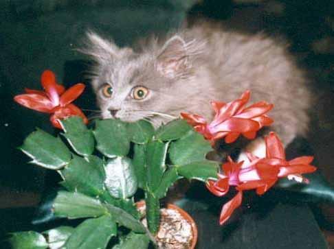Фотографии кошек разнообразных окрасов.