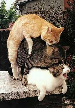 http://anekdotov.net/pic/photo9/message.jpg