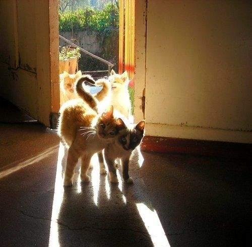 http://anekdotov.net/pic/postcards/cat/0354143y.jpg